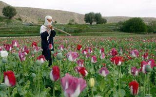 se-epipeda-rekor-i-kalliergeia-opioy-sto-afganistan0
