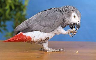 ipa-papagalos-poy-miloyse-agglika-epestrepse-sto-spiti-toy-meta-apo-tessera-chronia-echontas-mathei-amp-8230-ispanika0