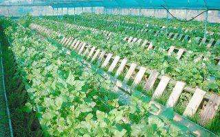 Ανάμεσα στους δυνητικούς δικαιούχους στους οποίους θα απευθύνεται η δράση είναι και οι επιχειρήσεις του αγροδιατροφικού κλάδου, δηλαδή επιχειρήσεις που δραστηριοποιούνται στους τομείς της μεταποίησης και της εμπορίας γεωργικών προϊόντων ως τρόφιμα, σε συγκεκριμένη γεωγραφική περιφέρεια.