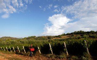 Τα οινοποιεία παράγουν κρασιά από συγκεκριμένα κτήματα, οπότε δεν είναι εύκολη η αύξηση της παραγωγής.