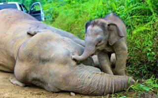 mnimi-elefanta0
