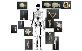 plithos-erotimaton-apo-toys-skeletoys0