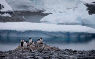 Πιγκουίνοι γκεντού ατενίζουν τον ωκεανό κοντά στον σταθμό Χίγκινς της χιλιανής επιστημονικής αποστολής, ένα από τα σημεία ραγδαίας τήξης των πάγων.