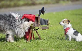Film dogs Tom Tom, left, and Jo Jo perform with a camera at a presentation for the dog and cat show in Dortmund, Germany, Tuesday, April 28, 2015. The eight year old Tibetan terrier and the three year old Parson Jack Russel dog played in several TV shows and commercials and show their talents at the fair in Dortmund. (AP Photo/Martin Meissner)