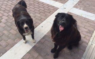 Δύο σκυλάκια που θανατώθηκαν από τους ασυνείδητους πολίτες.