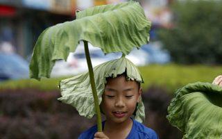 Καλοκαίρι. Να προστατευτεί από τον ήλιο θέλησε ο μικρός της φωτογραφίας, μια ζεστή καλοκαιρινή ημέρα στο Πεκίνο. Για τον λόγο αυτό έκοψε φύλα λωτού και  χρησιμοποίησε το ένα σαν ομπρέλα και το άλλο σαν καπέλο. REUTERS/Kim Kyung-Hoon
