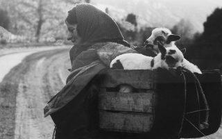 Ηπειρώτισσα με μειδίαμα αξιοσύνης, με την ξύλινη «κούνια» των μικρών προβάτων στην πλάτη της, πορεύεται... Φωτογραφία Κώστας Μπαλάφας.