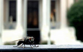 Στο βάθος, ναι, είναι το Μαξίμου. Ομως το σιχαμερό έντομο, σε πρώτο πλάνο, δεν είναι μύγα. Είναι μικροσυσκευή κατασκοπείας, από αυτές που κυνηγούσαν εκείνη την κυρία των ΑΝΕΛ...
