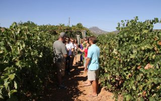 Ο Σύνδεσμος Οινοποιών Νεμέας θα διοργανώσει για 11η χρονιά τη γιορτή του κρασιού. Το Σαββατοκύριακο 29-30 Αυγούστου θα είναι ανοιχτά όλα τα επισκέψιμα οινοποιεία της περιοχής καθ' όλη τη διάρκεια της ημέρας.