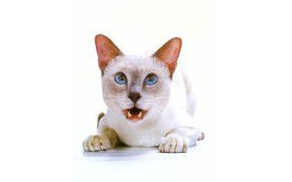Ο Walter Chandoha έγινε γνωστός για το φωτογραφικό του ενδιαφέρον στις γάτες...