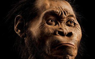 Στην εικόνα, η αναπαράστασή του Homo Naledi.