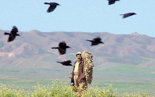 Εξαιρετικά ενδιαφέρουσα η ομαδική συμπεριφορά των κοράκων, λένε Αμερικανοί επιστήμονες. Τα πτηνά πλησιάζουν τους νεκρούς τους, διότι από αυτό μπορεί να αποκομίσουν στοιχεία πολύτιμα για τη δική τους μακροημέρευση.