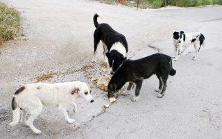 Στη Βέροια, οι εγκαταλείψεις ζώων αλλά και οι δηλητηριάσεις αυξάνονται διαρκώς, παρά την αυστηροποίηση των ποινών.