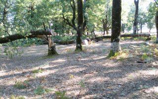 Ενα δέντρο μπορεί να φέρει κέρδος από 150 έως και 250 ευρώ.