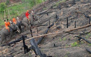 Θα γίνουν τα καμένα φυτείες, όπως συμβαίνει έως τώρα, ή το μέγεθος της καταστροφής θα πυροδοτήσει ουσιαστικές αλλαγές;