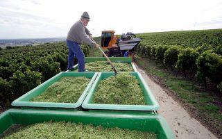 Με 26.500 εκτάρια αμπελώνων, στα εδάφη από τα οποία περνάει ο ποταμός Ρήνος, το Μάιντς είναι η πρωτεύουσα του γερμανικού κρασιού.