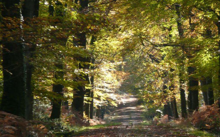 ΣτΕ: Το Δημόσιο υποχρεούται να ανταλλάσσει μη αξιοποιήσιμες δασικές εκτάσεις