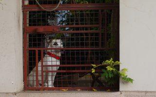 Αθηναίος σκύλος σε αυλή ενός δρόμου κοντά στο Χίλτον.