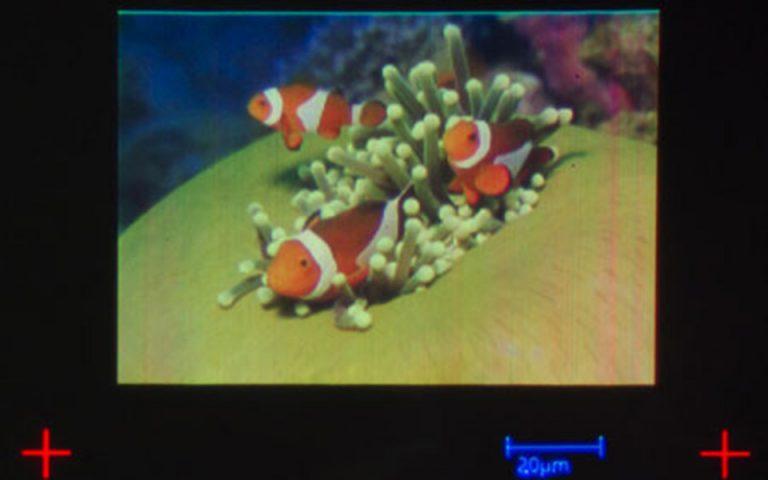 rekor-gkines-gia-tin-ektyposi-tis-mikroteris-egchromis-eikonas-ston-kosmo-2114866