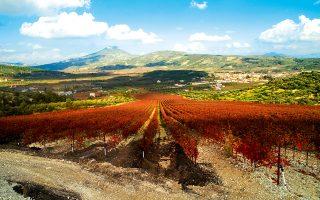 Η Νεμέα είναι η μεγαλύτερη αμπελουργική ζώνης της Ελλάδας. (Φωτογραφία: ΚΑΝΑΡΗΣ ΤΣΙΓΚΑΝΟΣ)