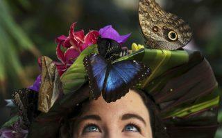 Λουλούδια, πεταλούδες και γαλάζια μάτια. Η εντομολόγος Anna Platoni ποζάρει μαζί με τις πιο σπάνιες πεταλούδες που θα περιέχει η έκθεση «Butterflies in the Glasshouse». Στην ετήσια έκθεση που γίνεται στο Wisley της Βρετανίας, οι επισκέπτες θα έχουν να θαυμάσουν μερικές από τις ομορφότερες πεταλούδες του κόσμου, μιας και θα πετούν ολόγυρα τουλάχιστον 40 διαφορετικά είδη. REUTERS/Luke Macgregor
