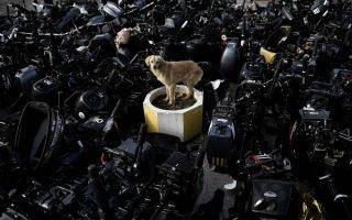 Δεν έχω μέρος να σταθώ. Απελπισμένος ο αδέσποτος σκύλος στην Μυτιλήνη κοιτά γύρω του. Kαλυμμένος ο προβλήτας του λιμανιού  με μηχανές ταχύπλοων, απομεινάρι του τεράστιου κύματος μετανάστευσης που σαρώνει το νησί.  AFP / ARIS MESSINIS