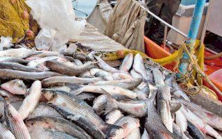 Το 96% των ιχθυαποθεμάτων στα ευρωπαϊκά νερά της Μεσογείου υπεραλιεύεται.