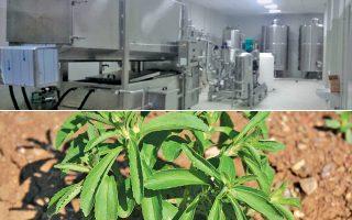 Η καινοτομία του εργοστασίου της Καρδίτσας (πάνω) έγκειται και στη μεθοδολογία, αφού στο πλευρό του συνεταιρισμού βρέθηκε το Τμήμα Τεχνολόγων του ΤΕΙ Θεσσαλίας, προσφέροντας την απαραίτητη τεχνογνωσία.