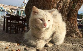 Ο Κουνκούς, ο γάτος από το Ιράκ, βρήκε για λίγο φιλοξενία και τροφή στη Λέσβο, προτού επανενωθεί με τα αφεντικά του που είχαν ήδη φτάσει στη Νορβηγία.