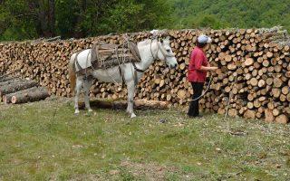 Στη χώρα μας λειτουργούν 810 δασικοί συνεταιρισμοί. Πρόκειται για ομάδες 7 ατόμων, που συνιστούν έναν συνεταιρισμό και μισθώνουν από το κράτος ή ιδιώτες ένα κομμάτι δάσους, το οποίο εκμεταλλεύονται σύμφωνα με τις υποδείξεις του τοπικού δασαρχείου.
