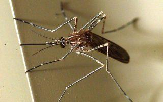 ragdaia-i-exaplosi-toy-ioy-zika-stin-kolomvia0