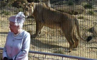 «Η βασίλισσα της Αφρικής». Μπροστά από μια περήφανη λιονταρίνα ποζάρει η Βασίλισσα Ελισάβετ στον Ζωολογικό Κήπο του Λονδίνου. Ο London Zoo εγκαινιάζει ένα νέο πρόγραμμα αναπαραγωγής των λιονταριών σε συνεργασία με αντίστοιχες μονάδες σε όλον τον κόσμο, με σκοπό την διατήρηση του υγιούς πληθυσμού τους.   REUTERS/Toby Melville