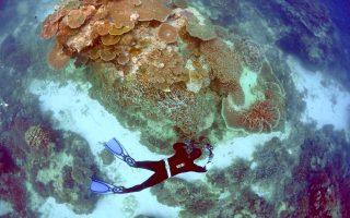 Την κατάσταση μεγάλης συστάδας κοραλλιών και την πρόοδο της θανατηφόρου λεύκανσής τους επιθεωρεί ομάδα ωκεανολόγων στον Μεγάλο Κοραλλιογενή Υφαλο στο Κουίνσλαντ της Αυστραλίας, ένα από τα απειλούμενα «φυσικά μνημεία της παγκόσμιας κληρονομιάς», όπως τον έχει χαρακτηρίσει η UNESCO.