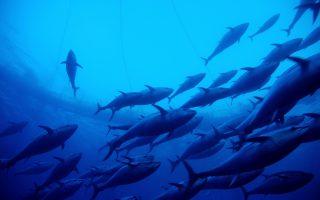 Η έκδοση ομολόγων 850 εκατ. δολ. το 2013 από τη Μοζαμβίκη για τη χρηματοδότηση στόλου αλιείας τόνου δεν κατευθύνθηκε τελικά προς αυτόν τον σκοπό. Μέσα σε λίγους μήνες έγινε γνωστό ότι τα κεφάλαια χρησιμοποιήθηκαν για την αγορά πλοίων του πολεμικού ναυτικού.