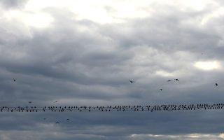 Πουλιά στα ηλεκτροφόρα σύρματα με συννεφιά...