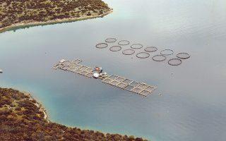 Οι μονάδες ιχθυοκαλλιέργειας της Στερεάς Ελλάδας παράγουν το 35% των ψαριών της χώρας.