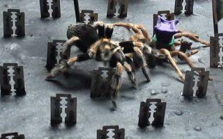 i-arachni-kai-oi-lepides0