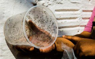 proeidopoiisi-toy-pagkosmioy-organismoy-ygeias-gia-ton-zika0