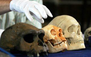 Κρανίο του Homo floresiensis (κέντρο) συγκρινόμενο με του Homos erectus (αριστερά) και του σύγχρονου ανθρώπου.