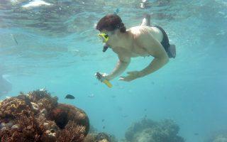 Ενα πραγματικό «θαύμα της ζωής» συντελείται από τα κοράλλια που κοσμούν τον βυθό των ωκεανών.