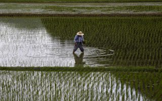 A farmer plants saplings in a rice field in Satsumasendai, Kagoshima prefecture, Japan, in this July 8, 2015 file photo. Pacific trade ministers have reached a deal on the most sweeping trade liberalization pact in a generation that will cut trade barriers and set common standards for 12 countries, an official familiar with the talks said on October 5, 2015. The Trans-Pacific Partnership would affect 40 percent of the world economy and would stand as a legacy-defining achievement for U.S. President Barack Obama, if it is ratified by Congress. Lawmakers in other TPP countries must also approve the deal. â?¨REUTERS/Issei Kato/FilesFROM THE FILES PACKAGE â??TPP DEAL STRUCK'SEARCH â??TPP DEALâ?? FOR ALL 20 IMAGES