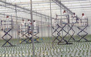 Η θερμοκηπιακή παραγωγή έχει καθοριστική σημασία για την ανάπτυξη και την επιβίωση των καλλιεργειών σε τοπικό και σε διεθνές επίπεδο. Ετσι, το εκτεταμένο πεδίο, το οποίο ξεκινάει από τη Θεσσαλονίκη και κλείνει στην Αλεξανδρούπολη, έχει τα χαρακτηριστικά να εξελιχθεί σε σύγχρονη και καινοτόμο ζώνη.