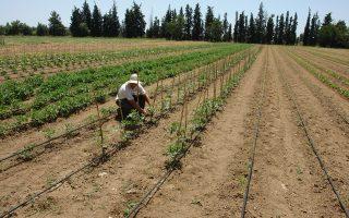 Στο αγρόκτημα των 130 στρεμμάτων στη Σίνδο Θεσσαλονίκης καλλιεργούνται σήμερα σιτηρά και εποχικά λαχανικά.