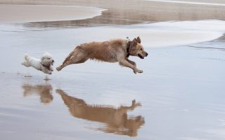 Σε υπόθεση που έφτασε στα δικαστήρια, οι δικαστές έκριναν ότι στις μη οργανωμένες παραλίες μπορεί καθένας να απολαμβάνει το μπάνιο του με το σκυλί του, ακόμα και αν εμφανιστούν άλλοι κολυμβητές.