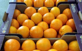 Στον τομέα των φρούτων πρωτοστατούν στον όγκο εξαγωγών τα μανταρίνια με αύξηση 99,7%, και ακολουθούν τα πορτοκάλια με 73,9%, οι φράουλες με 12,7% και τα μήλα με 8%, συγκριτικά με το αντίστοιχο εξάμηνο του 2015.