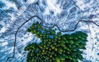 1ο Βραβείο – Κατηγορία Φύση - Άγρια Ζωή – Δάσος Kalbyris/Δανία,  Michael Bernholdt