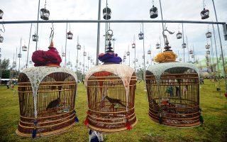 Να σε ακούσω. Μια παράδοση της Ταϊλάνδης τείνει να γίνει μεγάλη ατραξιόν για την ευρύτερη περιοχή. Την αγάπη τους στο τραγούδι των πουλιών δείχνουν στην περιοχή Narathiwat συγκεντρώνοντας τα πουλιά για να διαγωνιστούν μεταξύ τους. Οι επισκέπτες συρρέουν από την Ταϊλάνδη την Μαλαισία αλλά και την Σιγκαπούρη για να απολαύσουν μερικές ώρες αμόλυντης διασκέδασης και ουράνιας μουσικής.  AFP / MADAREE TOHLALA