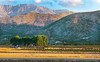 Το Οροπέδιο Λασιθίου (ή απλώς Λασίθι) είναι από τα πιο ιδιαίτερα μέρη ολόκληρης της Κρήτης. (Φωτογραφία: ΚΛΑΙΡΗ ΜΟΥΣΤΑΦΕΛΟΥ)