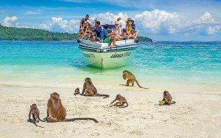 Η παραλία Monkey Beach γεμίζει μαϊμουδάκια. Προσοχή, δαγκώνουν! (Φωτογραφία: Shutterstock)