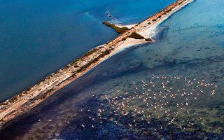 Σμήνος από φλαμίνγκο πετάει πάνω από τη λιμνοθάλασσα του Μεσολογγίου. (Φωτογραφία: Περικλής Μεράκος)